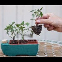 Self Watering Seed Starter by Orta