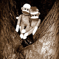 Sock Monkey Art - Best Friends - Photograph - Nursery, Playroom, Humor, Whismical Art 11x14
