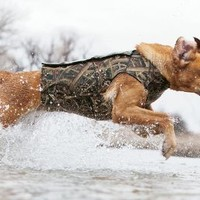 Cabela's 5mm Neoprene Flotation  Dog Vest with Armor-Flex™ Chest Protector