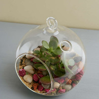 Large Glass Terrarium - Urban Outfitters