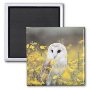 Barn Owl In Meadow Magnet