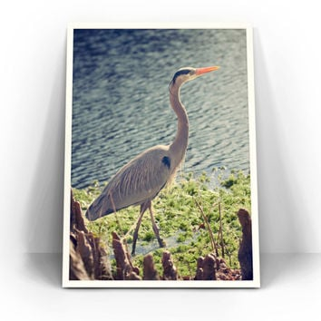 Blue Heron Photograph - Wildlife Fine Art Photography, Bird, Animal, Nature, Charleston, South Carolina Wall Art, Home Decor, Blue Green