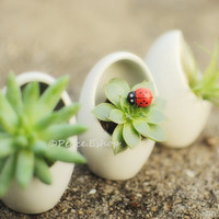 FREE SHIPPING Egg Shape White Ceramic Container -- for water plants, succulents, dried flowers, air plants