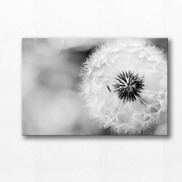 dandelion canvas art dandelion wall art 12x12 20x30 fine art photography canvas art black white canvas print photography nature canvas wrap