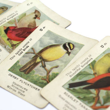 Vintage Birds Cardinal Tanager Goldfinch Flycatcher Vintage Bird Swap Cards Paper Supplies Collectable Ephemera Scrapbooking