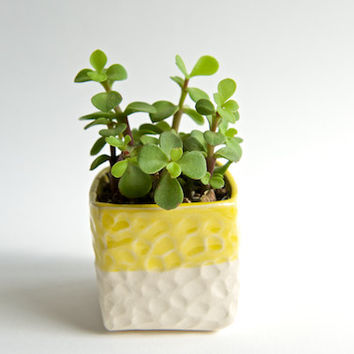 Succulent Planter in Yellow Stoneware- Small Cube- Handmade Ceramics by RossLab Indoor Succulent Gardening Yellow Summer Decor RossLabDesign