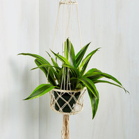 As Luck Macrame Have It Hanging Planter
