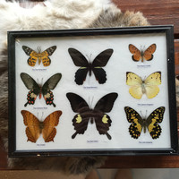 8 Ryker Mounted Butterflies