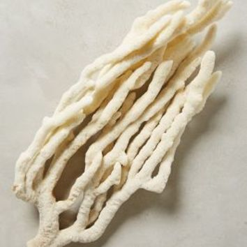 Natural Sea Sponge by Anthropologie