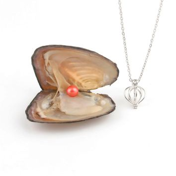 Pearl Oysters with Round 7-8 mm Love Wish Real Freshwater Pearl and Nacklace Set (Chain 55cm)