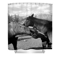 Affection two horses Shower Curtain for Sale by Ivy Ho