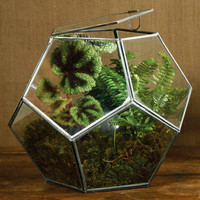Lucas Faceted Terrarium
