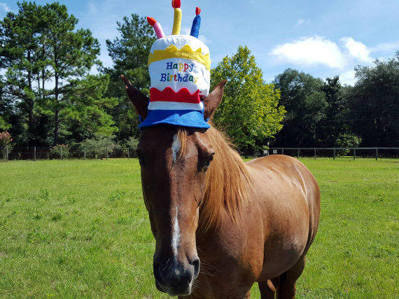 Birthday Hat For Horse Or Pony With From MyBuddyBling