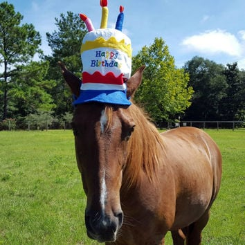 Birthday Hat For Horse Or Pony With Candles Soft Equine