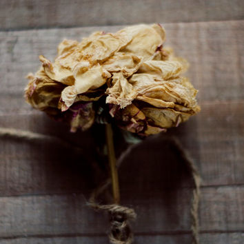 Flower photography, rustic wall decor, brown, peony, french country decor, dried flower, romantic art, fine art photo, 8x10, botanical art