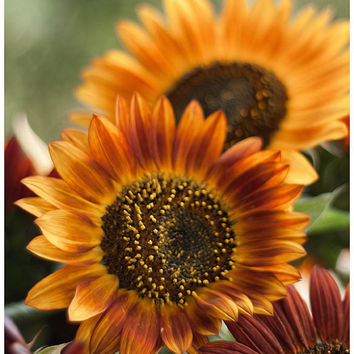 Sunflower photo flower photography floral photo print colour fine art print wall art amber yellow wall decor living room decor summer decor