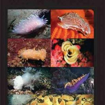 A Field Guide to Nudibranchs of the Pacific Northwest