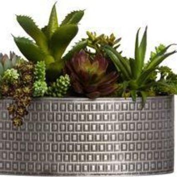 Mixed Succulent In Oval Textured Tin Pot