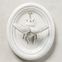 Entomologist Wall Bust by Anthropologie in Ivory Size: