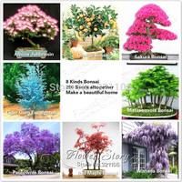 Hot ! 8 kinds Bonsai Tree 270+ Seeds,   Albizia orange Sakura,Metasequoia,Paulownia,Wisteria, Japanese Maple...Free Shipping