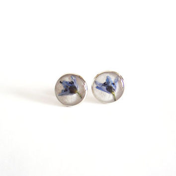 Real flower earrings -  Blue alpine squill flowers - Silver earring studs - Spring flower ear posts - Nature inspired jewelry - Botanical