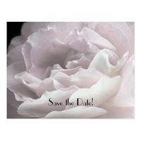 Save the Date 85th Birthday Party, Pale Pink Rose Postcard