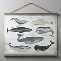 Scientific Whale Tapestry