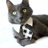 Dog/Cat pointed shirt collar w/ black and by BlueBeagleBoutique