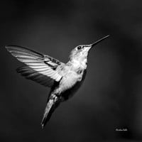 Hummingbird Flight, Black and White Photography, Hummingbird Print, Black White Wall Art, Nature Photography