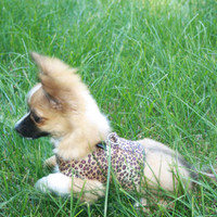 Cheeta Print XXS Harness