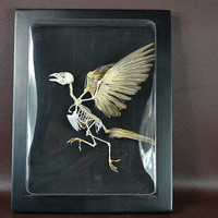 Frame bird taxidermy mounted on Frame,free shipping to everywhere