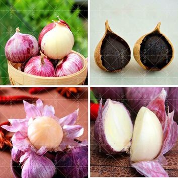 100PCS Rare Garlic Seeds pure natural and organic Vegetable Seeds healthy bonsai seeds for  Garden Plants Kitchen seasoning food