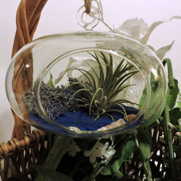 Hanging Turnip Shaped Globe Air Plant Terrarium