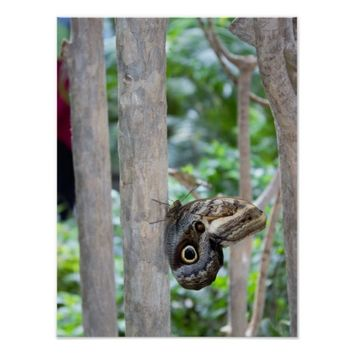 Butterfly on a Tree Poster