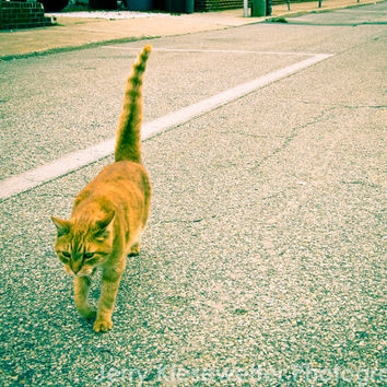 Stray Cat Street Photo, Urban Tabby Cat Photograph, Animal Photography, Fine Art Cat Portrait, Cute Animal Photo Home Decor Wall Art