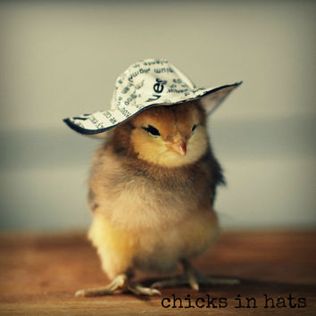Note Card Chick in Newsprint Hat Folded Photo Greeting Card With Envelope (1)