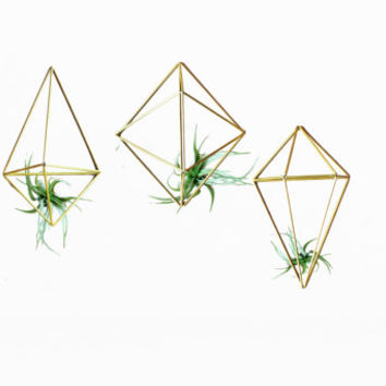 Set of 3 Himmeli Geometric Wall Air Plant Holder