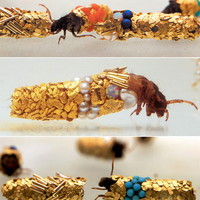 Beautiful Glitzy Sculptures Made By Moth-like Insects | OhGizmo!