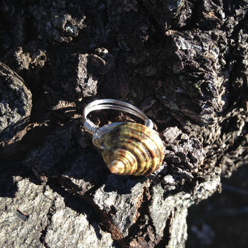 Sterling Silver Seashell Ring, size 8, wire wrapped ring