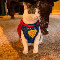 SUPER DOG Halloween Costume - SUPERMAN with cape -Choose your Super Hero - 2 to 20 lbs