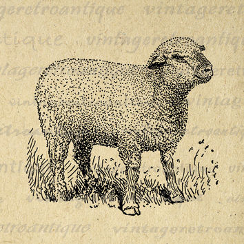 Little Hampshire Sheep Graphic Image Download Cute Lamb Printable Digital Vintage Clip Art Jpg Png Eps 18x18 HQ 300dpi No.3541