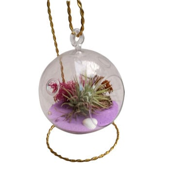 Pink Airplant Terrarium With Gold Stand