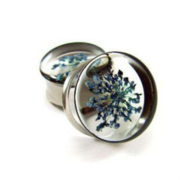 Blue Queen Anne's Lace Embedded Flower Plugs gauges - 5/8, 3/4, 7/8, 1 inch