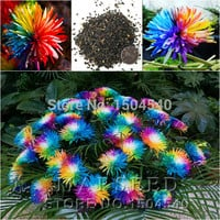 20 Rainbow Chrysanthemum Flower Seeds rare color new arrival DIY Home Garden flower plant