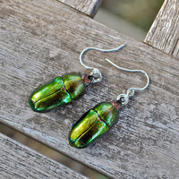 Floating Real Stag Beetle Earrings Green & Rust Moonrise Kingdom Movie