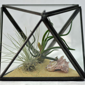 Modern Geometric Terrarium - Air Plant Terrarium  - Octahedron - Green Gift - Home Decoration