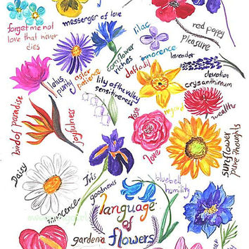 Language of flowers, flower mening, Botanic studies, Watercolor painting, home decoration, wall decor, illustration, gift for student, decal