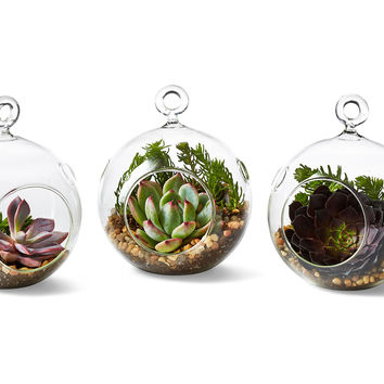 3-Pk Mini Succulent Terrarium Kit, Live, Arrangements