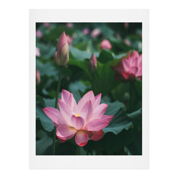 Catherine McDonald Lotus Field Art Print