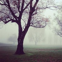 Foggy Creepy Tree Printed Backdrop - 6787